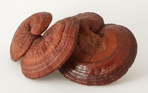 reishi mushrooms and cancer